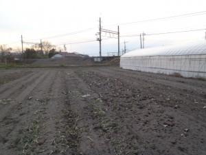ダイコン畑跡