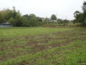草だらけの畑