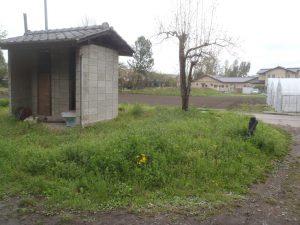 庭(草刈り前)
