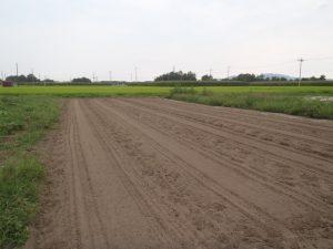 草取りしたニンジン畑