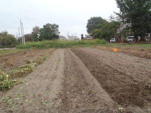 芋掘り終了